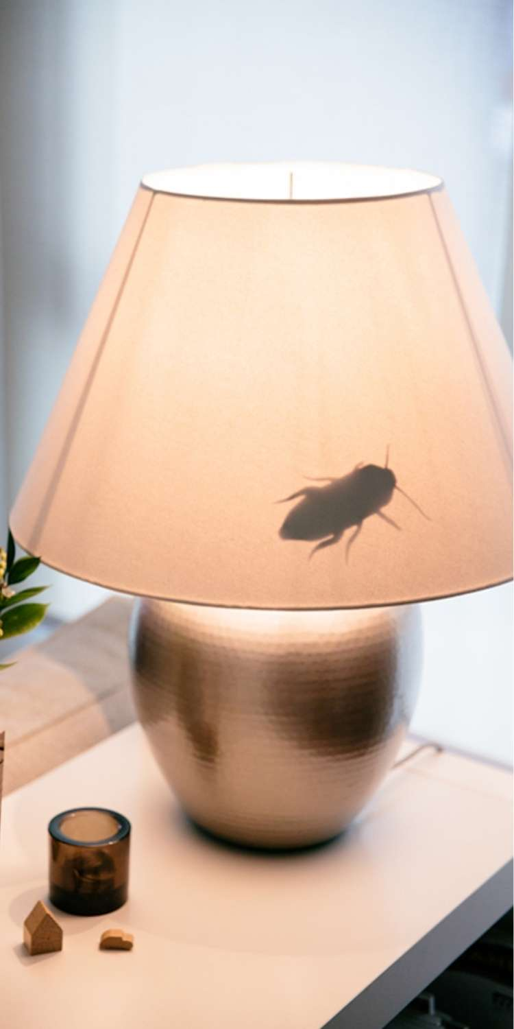 April Fools prank, a fake cockroach on the inside of a lamp shade