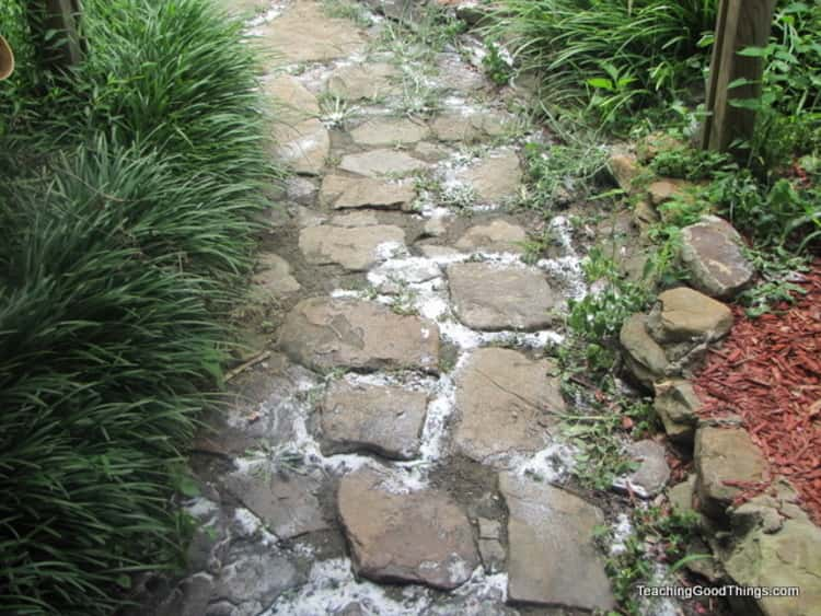 cobblestone path with patches of salt along part of it's length and flanked by green foliage