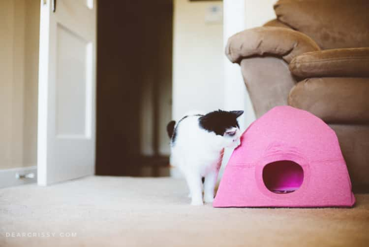 A kitty peeping into its DIY cat tent made from a pink t-shirt