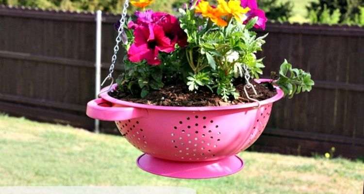 Pink Colander hanging planter