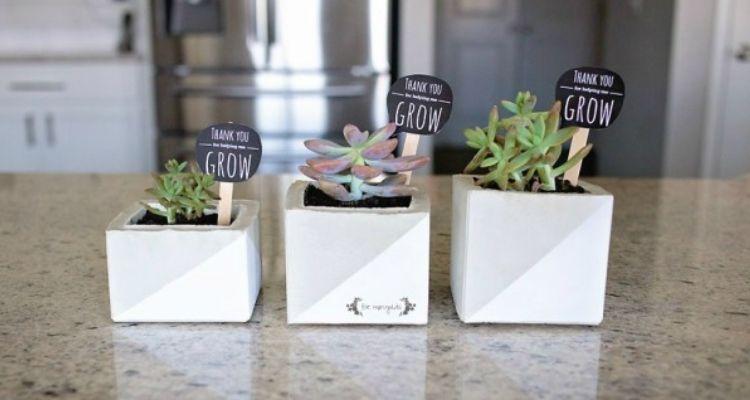 square succulent planters