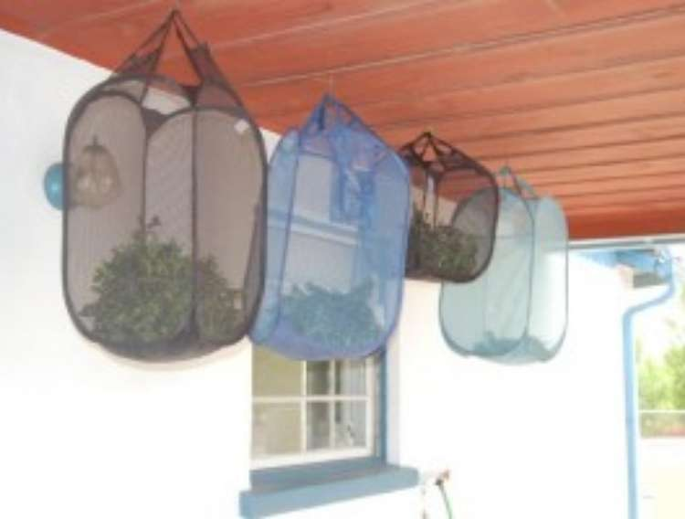 OneCrazyHouse Mesh Laundry Bags mesh hampers hung from ceiling outside filled with herbs that are being dried out