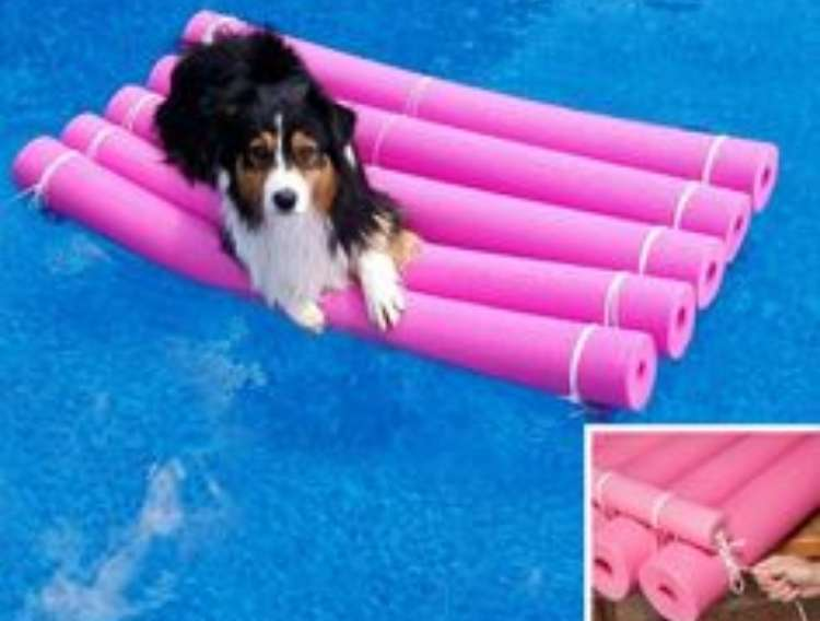 OneCrazyHouse pool storage dog on a raft made from pool noodles floating in a pool