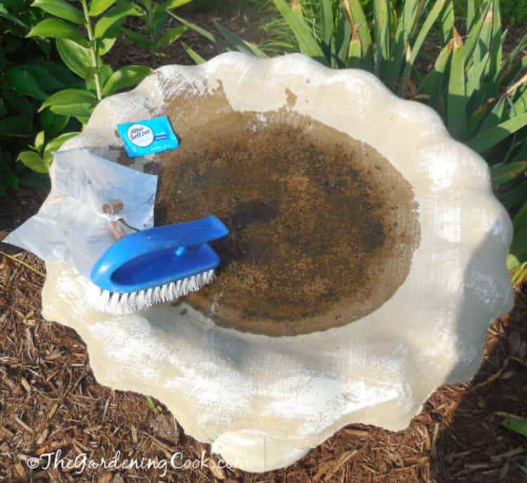A photo of a bird bath stained with algae. Alka-seltzer tablets, copper pipes and a brush are used to clean it