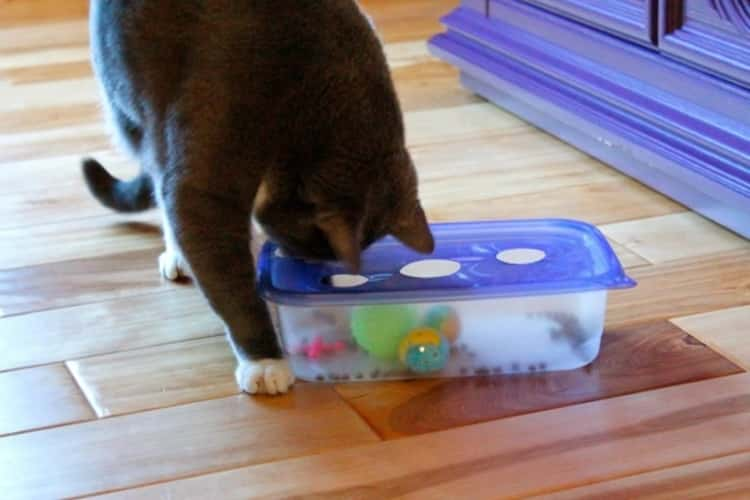 cat looking into a Tupperware container with cat toys through a hole on a Tupperware container lid