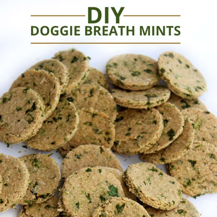 Dog breath mints
