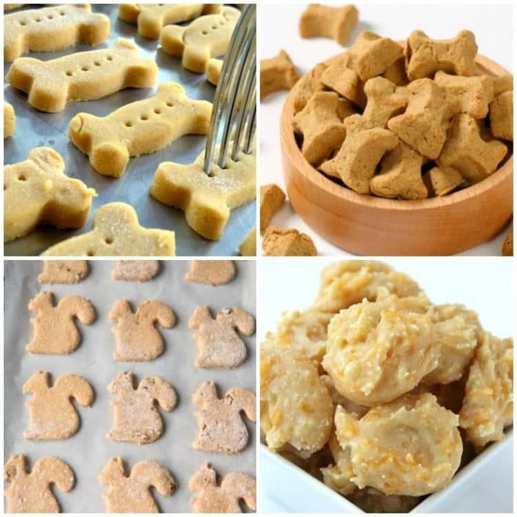 pumpkin biscuits,sweet potato biscuits, squirrel shaped cookies and apple sauce treats