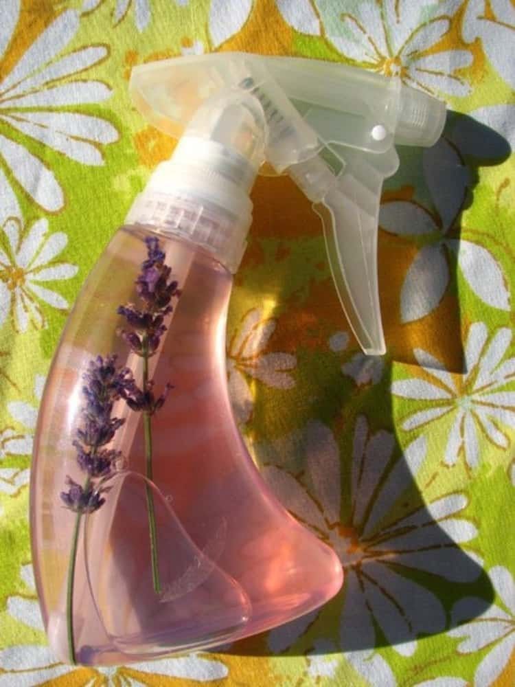 Homemade flea repellent made from lavender in a spray bottle