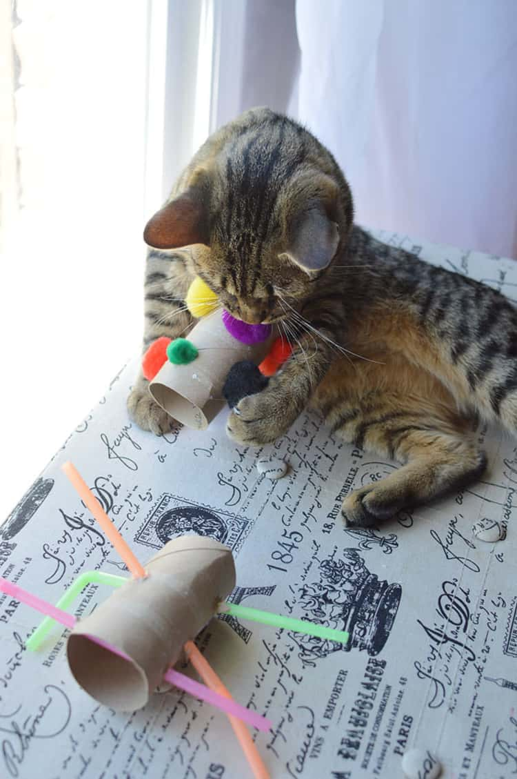 cat playing with DIY cat toys made from empty toilet rolls, pom-poms, and straws