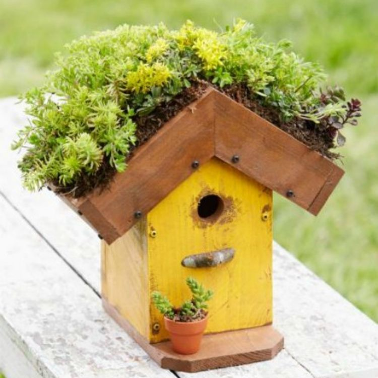 Living roofed birdhouse