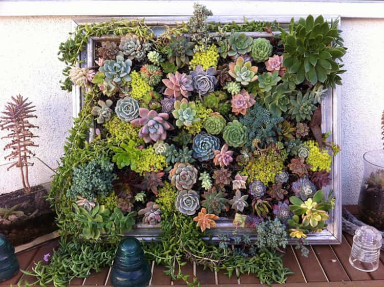 Succulents on a picture frame