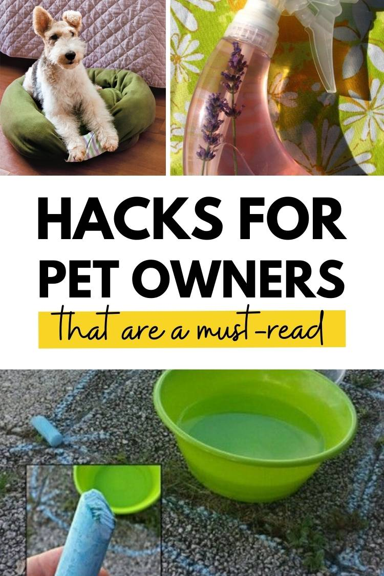 17 pet hacks every owner needs to know